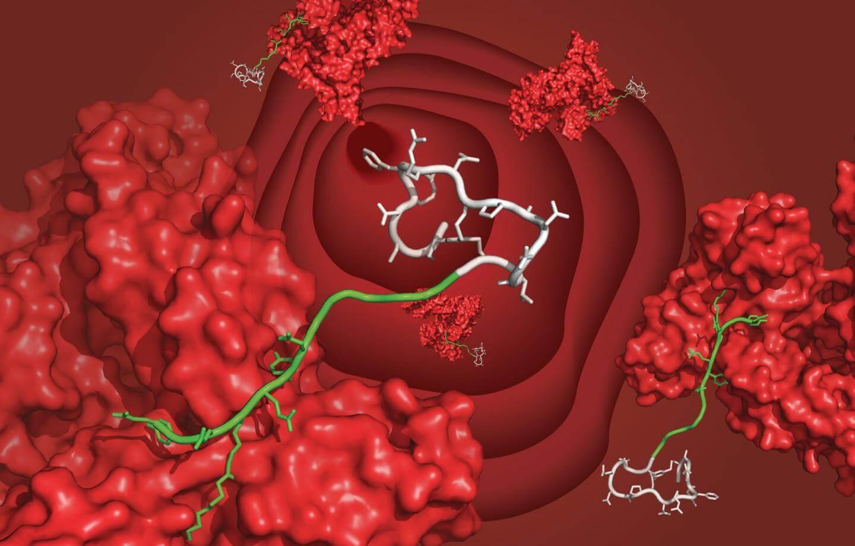 peptide drugs