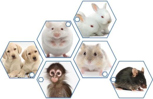 Preclinical Animal Studies