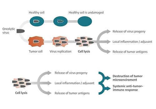 Virus-mediated tumor killing mechanism