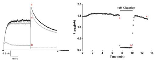 Cisapride inhibits hERG potassium current current graph and hERG peak current versus time