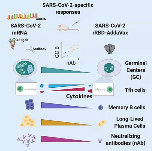 mRNA-vaccine