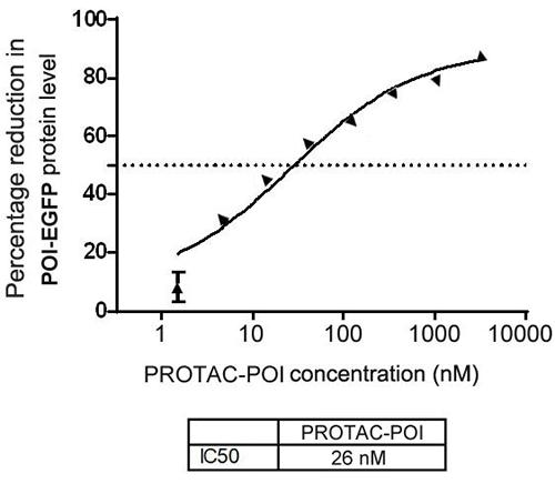 HEK 293T Stable Transgenic Cell Line (POI-EGFP) High-Throughput Screening