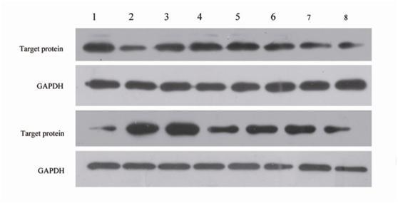 Western blot detection method