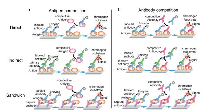 Detailed principle and flow chart of competitive ELISA. Antigen competitive ELISA (A); Antibody competitive ELISA (B).