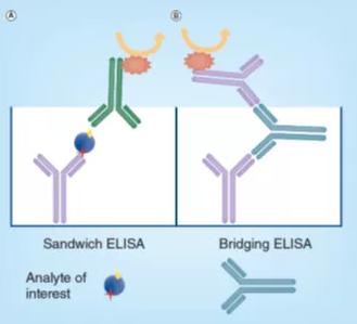 Schematic diagram of sandwich ELISA (A) and bridge ELISA (B).